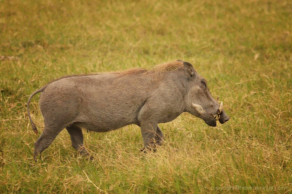 Serengeti: 17