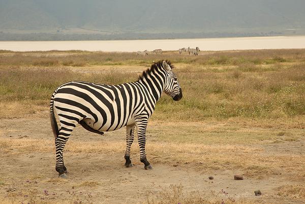 Serengeti: 18