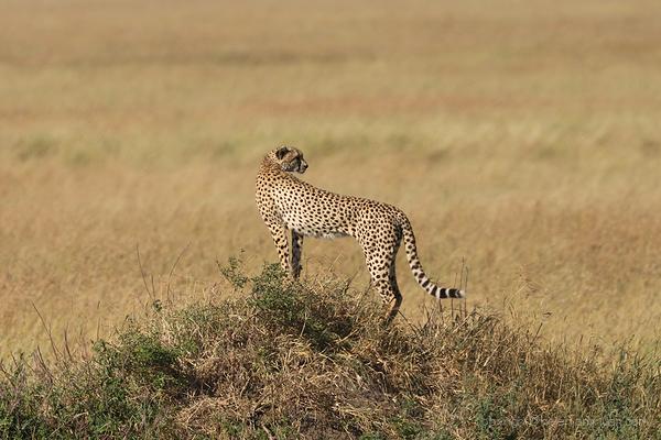Serengeti: 19