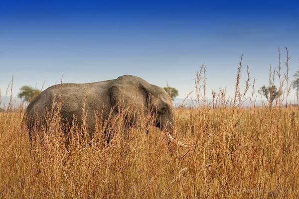 Serengeti: 20