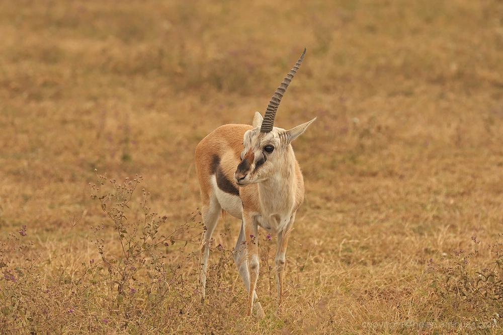 Serengeti: 21
