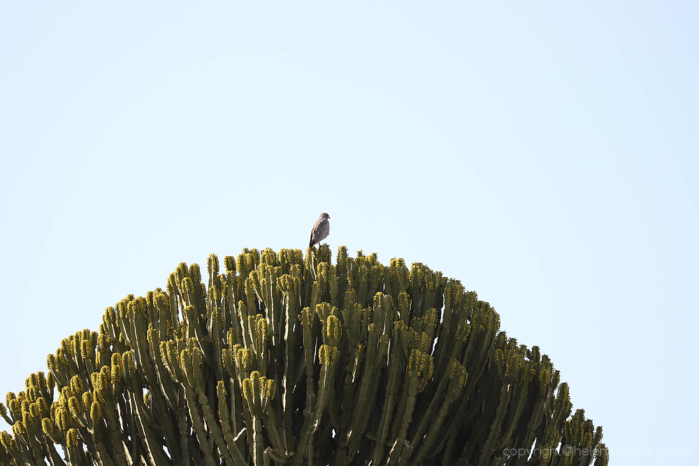 Bird on umbrella tree