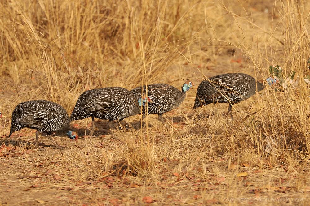 Zambia: South Luangua - 10