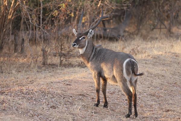 Zambia: South Luangua   11