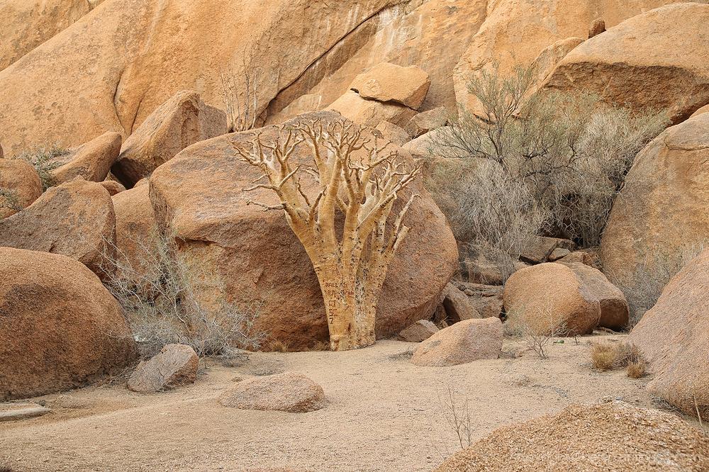 Namibia: Spitzkoppe 5