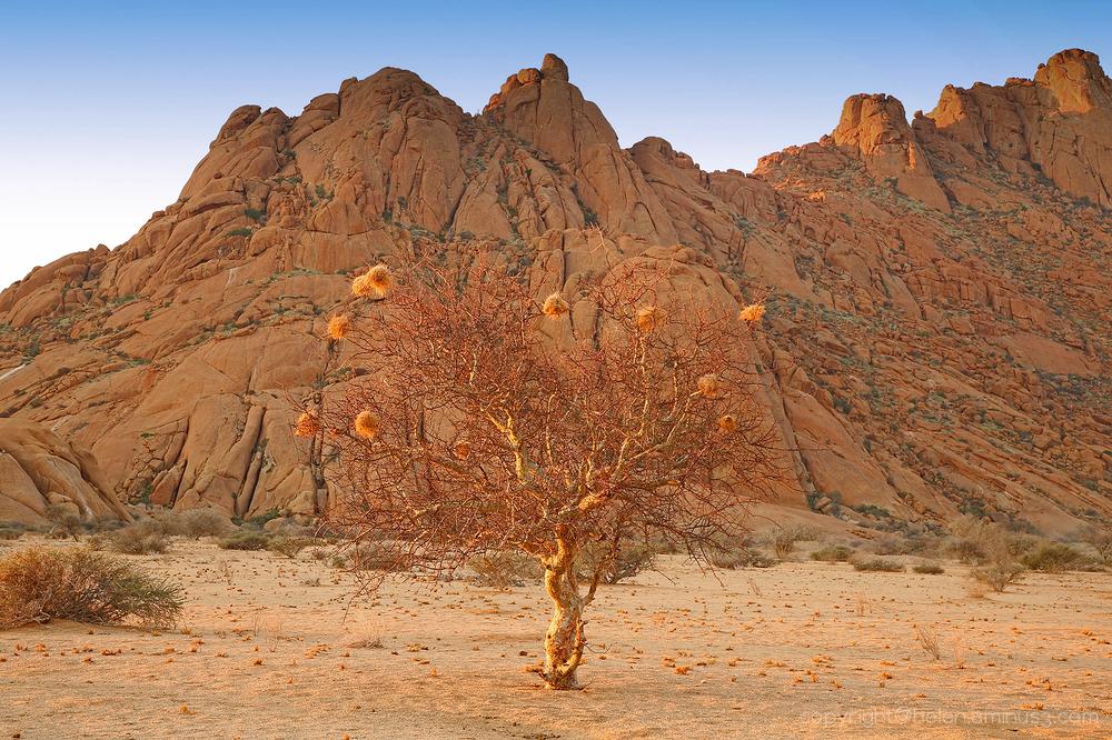 Namibia: Spitzkoppe 4