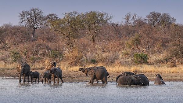 Kruger 3: Elephant herd