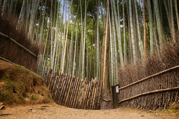 Arashiyama's magic bamboo grove