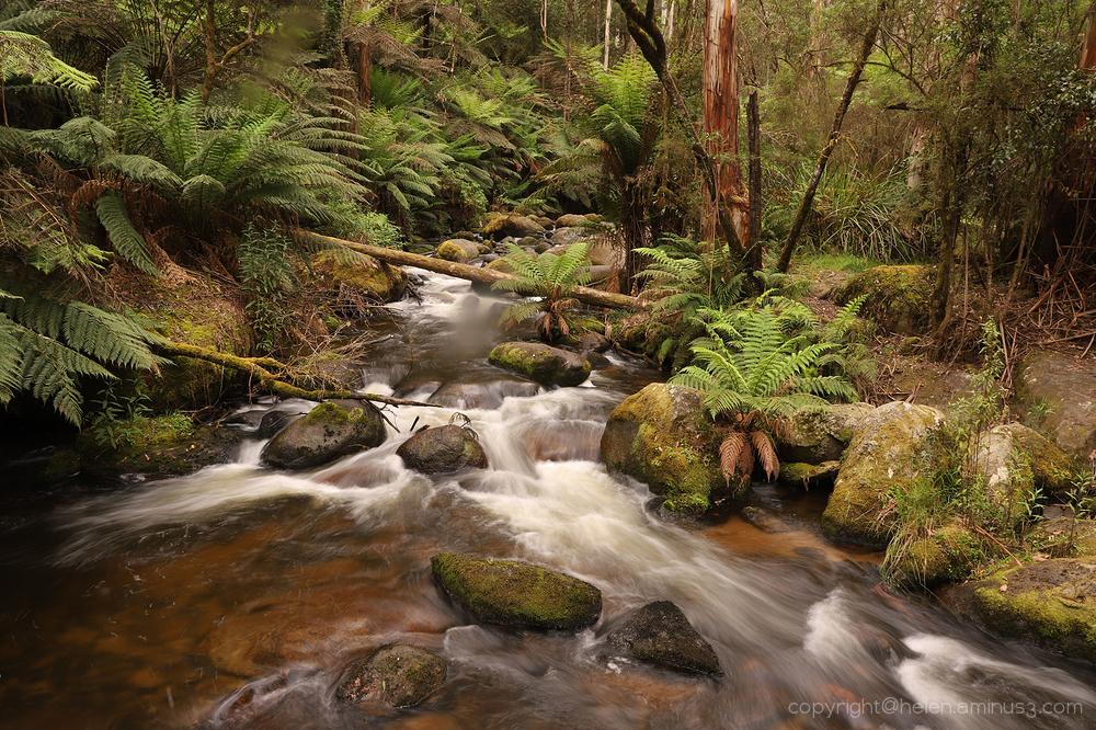 Toorongo falls - Noojee