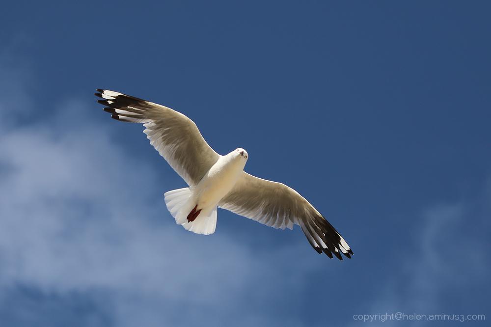 Free as a bird!