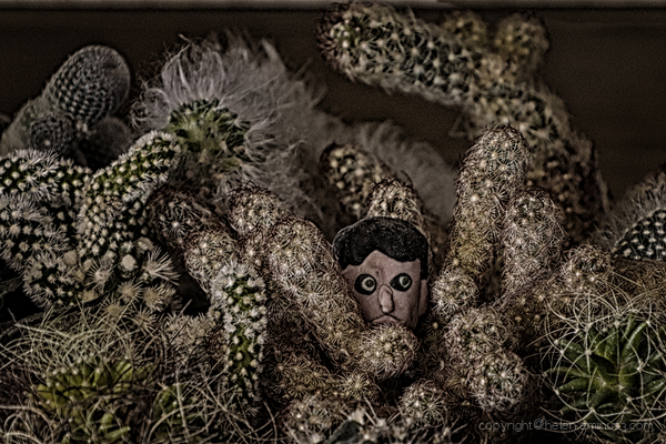 Self isolation: 10 - A prickly situation