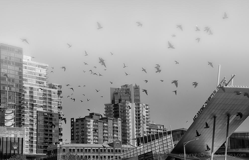 Birds in the fog