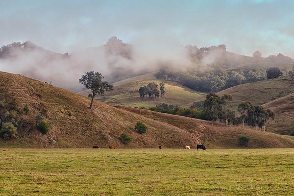 Helen Warnod - Mist on the hills