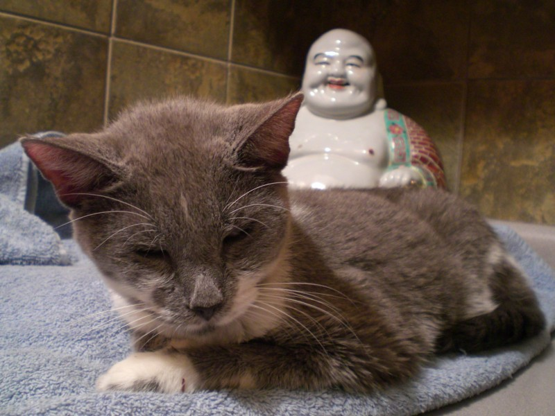kitty & buddha