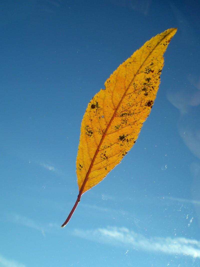 leaf on windshield II
