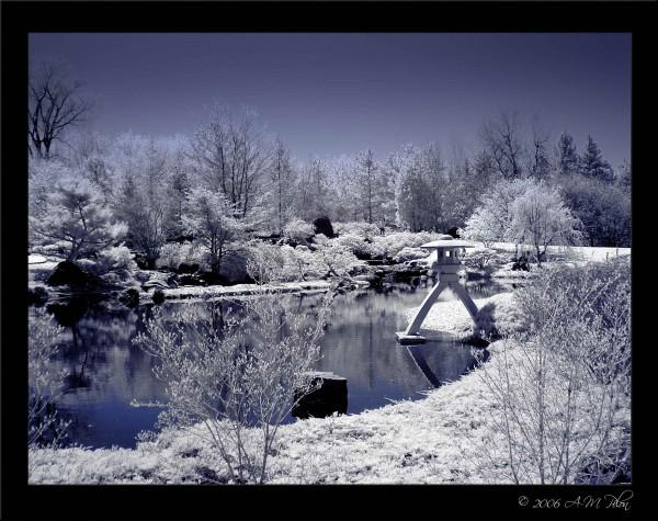 Montreal Botanical Garden Infrared