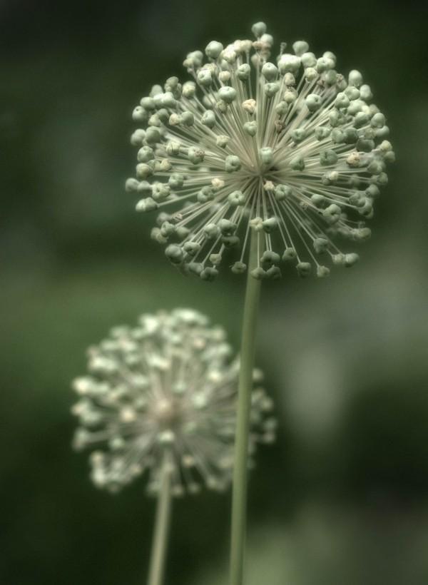 Fleur inconnue