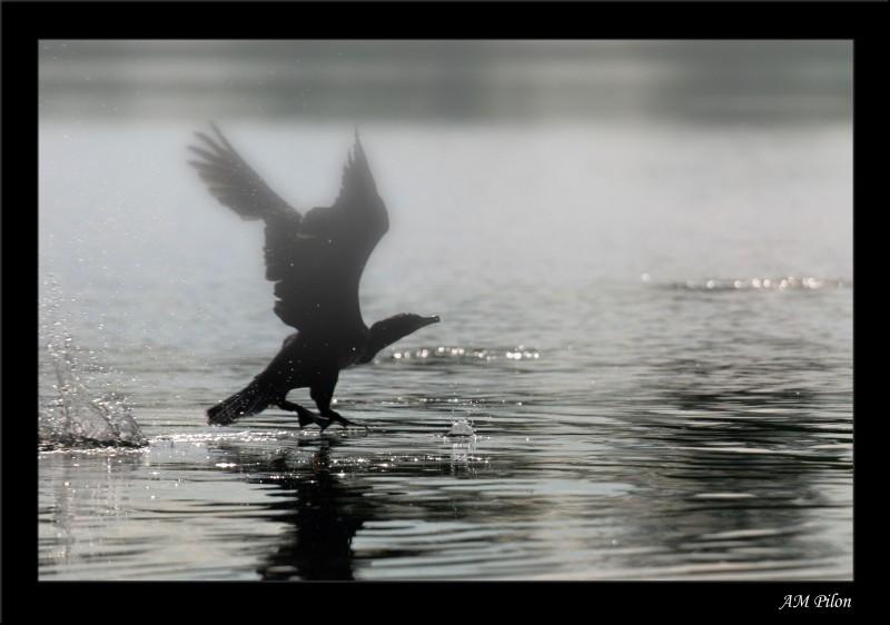 envol bird