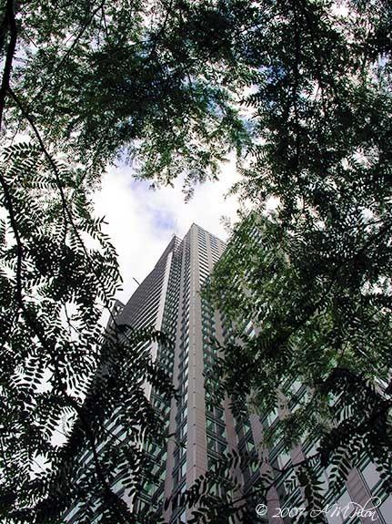 IBM Building through foliage