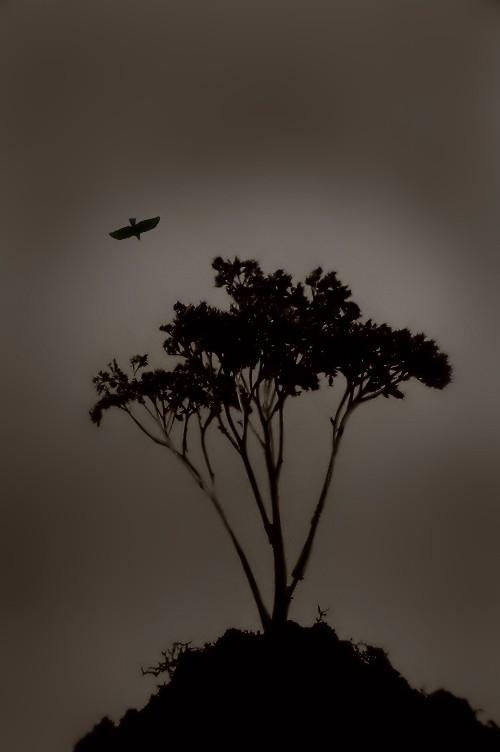 Tree and crow.