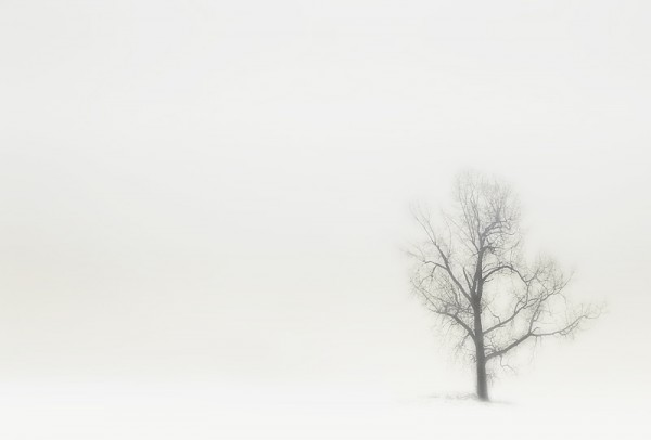 Tree in snow.