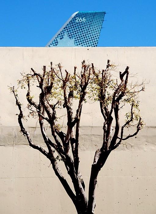 Jet Fin Tree