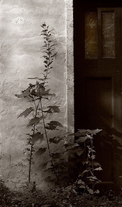 Crawling plant.