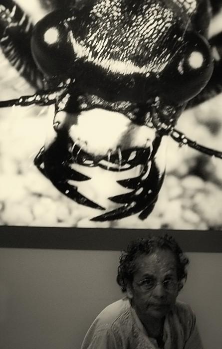 Kafka's Beetle