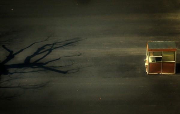 Windblown Shadow