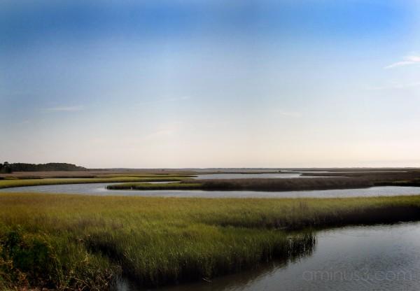 St. Marks Florida, Marine Estuarys,