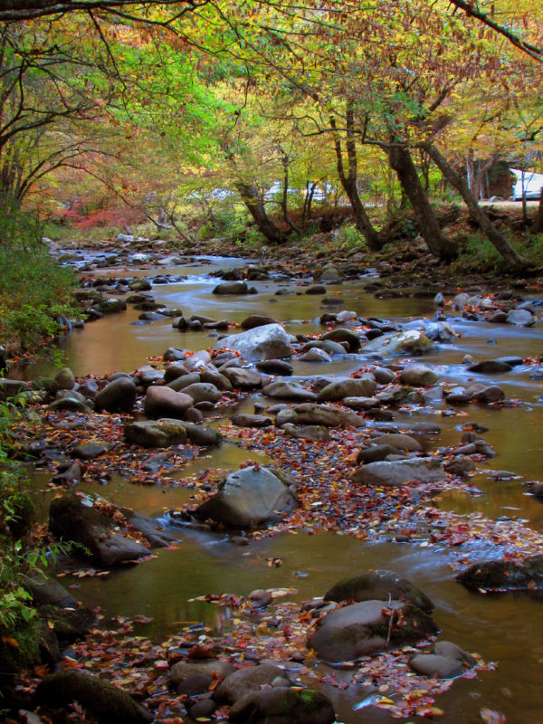 The Oconoluftee River - Great Smokey Mtns Nat Park
