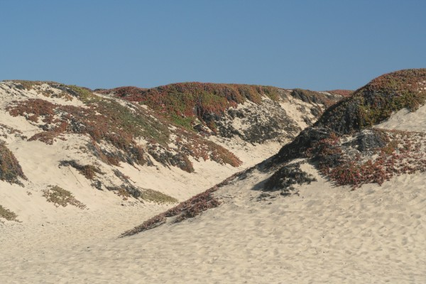 The Seaside Dunes
