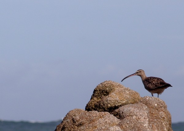 Bird at Pacific Grove
