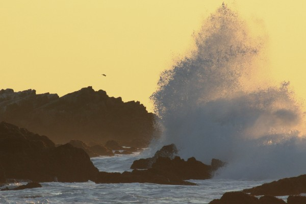 Pacific Grove Wave at Sunset