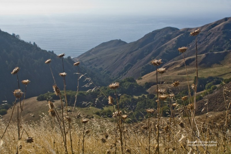 High in the Hills above the Big Sur Coast