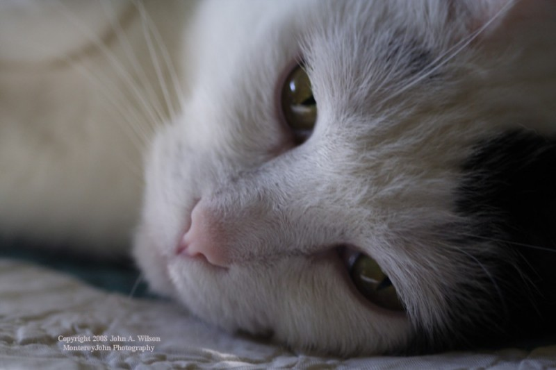 Bella The Attack Kitty
