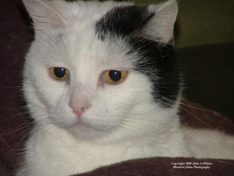 Kitty Kat Anxiety Attack