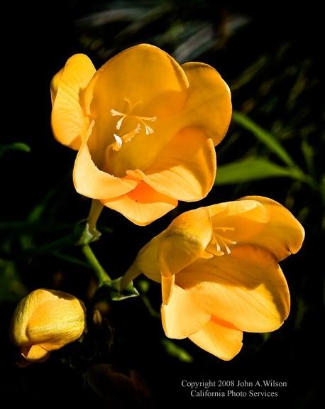 California_Garden