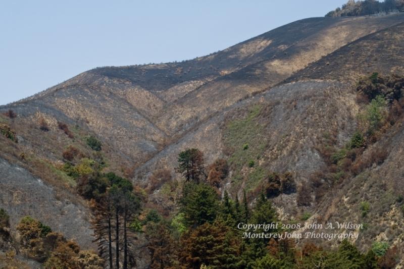 Burned Big Sur Hillside in Aftermath of Big Sur Ba