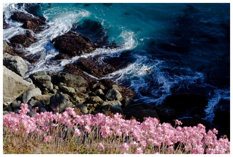 Big Sur - Flowers on a Cliff