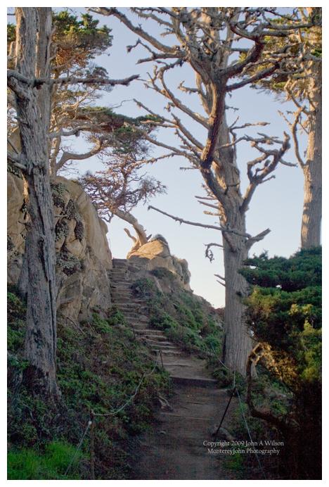 Point Lobos Trail