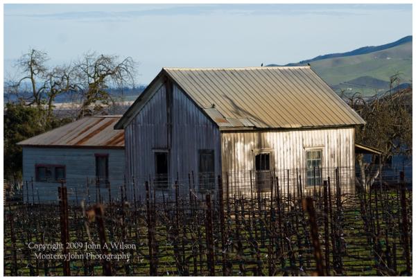 Salinas Valley, Monterey County, Vineyard