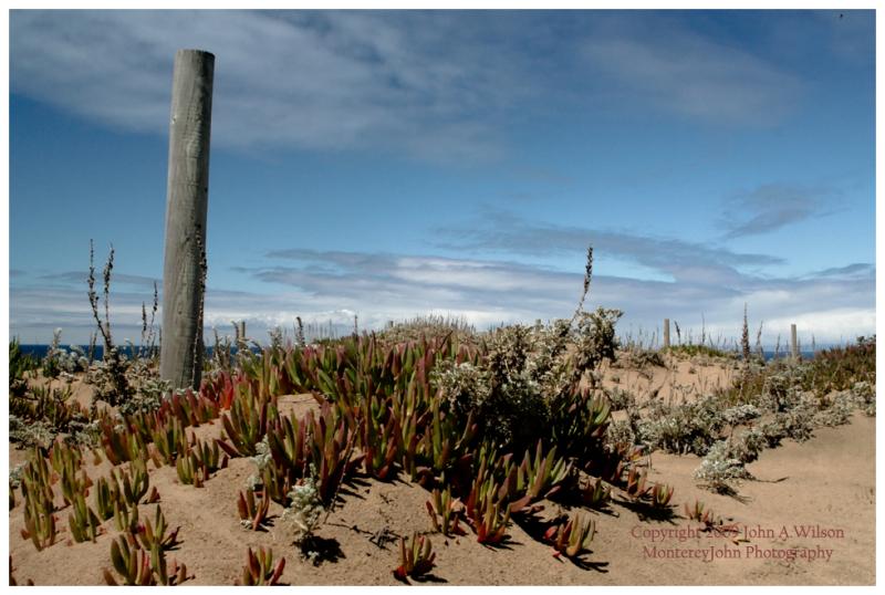Dunes at Ft Ord, Monterey Bay, CA