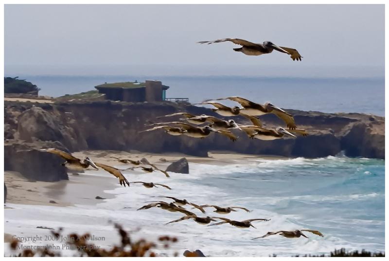 Flight of Pelicans, Garapata Beach, Big Sur