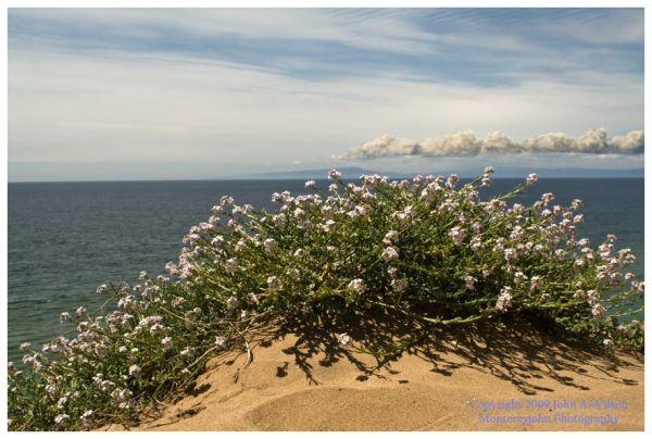 Monterey Bay Dunes