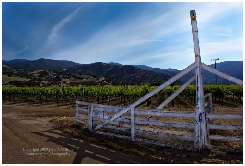 Salinas Valley Vineyard