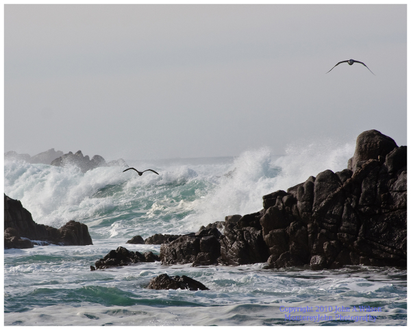 Pacific Groves, CA - Gulls Over Surf and Rocks