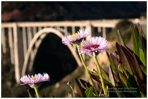 Spring Daisies at Bixby Bridge