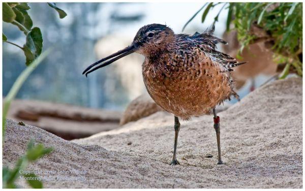 Bird at Monterey Bay Aquarium