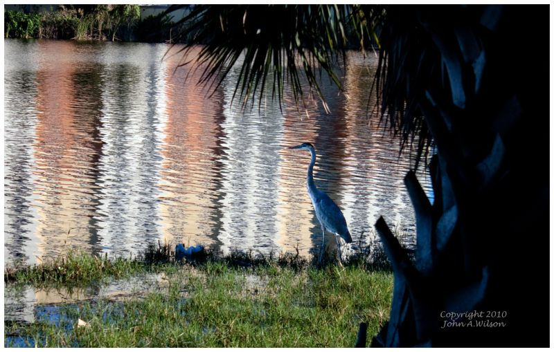 Heron at Melbourne, Florida harbor
